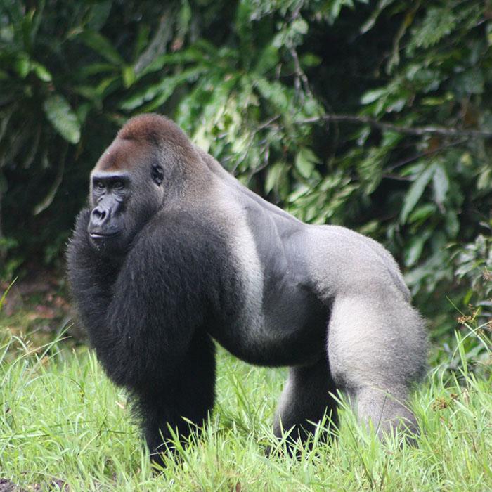 Congo Safari Holidays