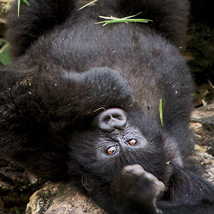 Congo Safari Adventures