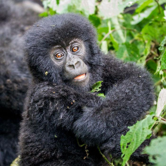 Visit Congo