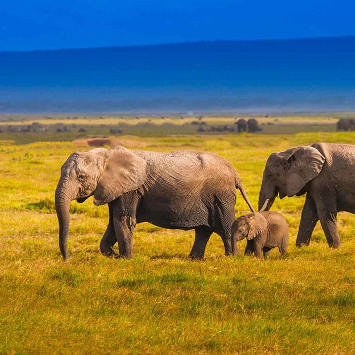 Kenya Safari Expeditions