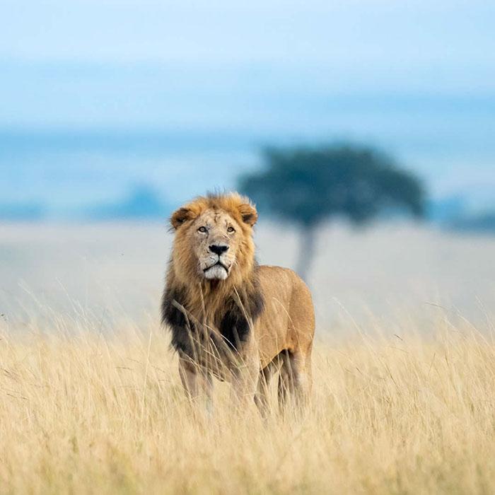 Visit Magical Kenya