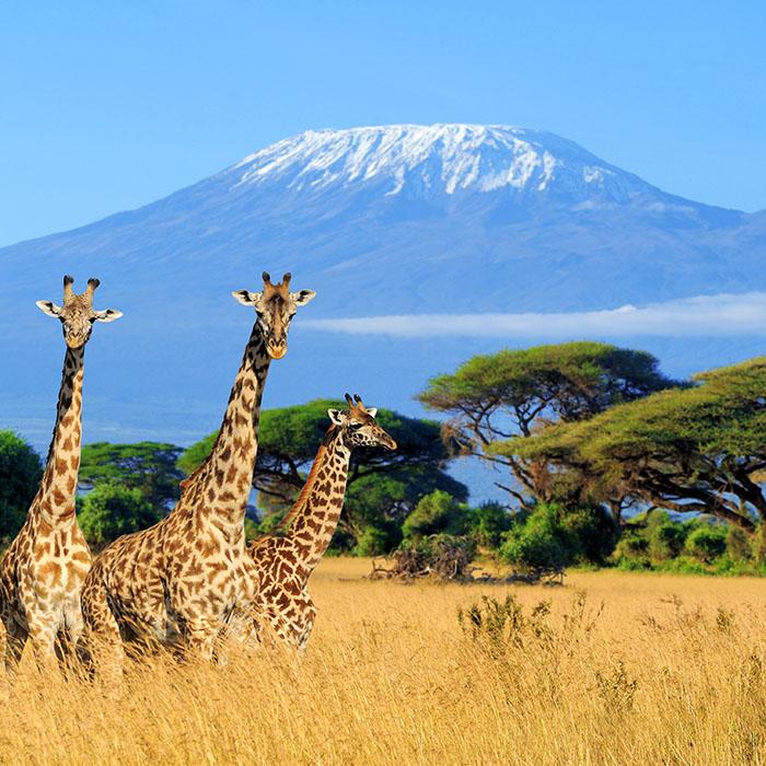 Tanzania Safari Expeditions