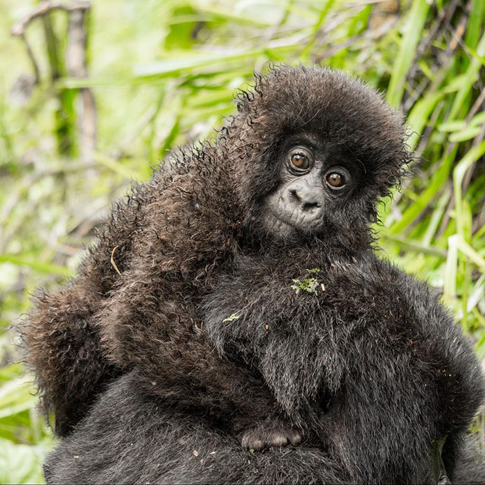 Rwanda Safari Adventures