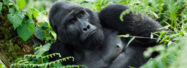 2 Days Mgahinga Gorilla Safari from Kigali