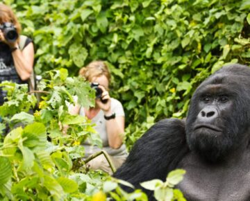 3 Days Rwanda Gorilla Safari
