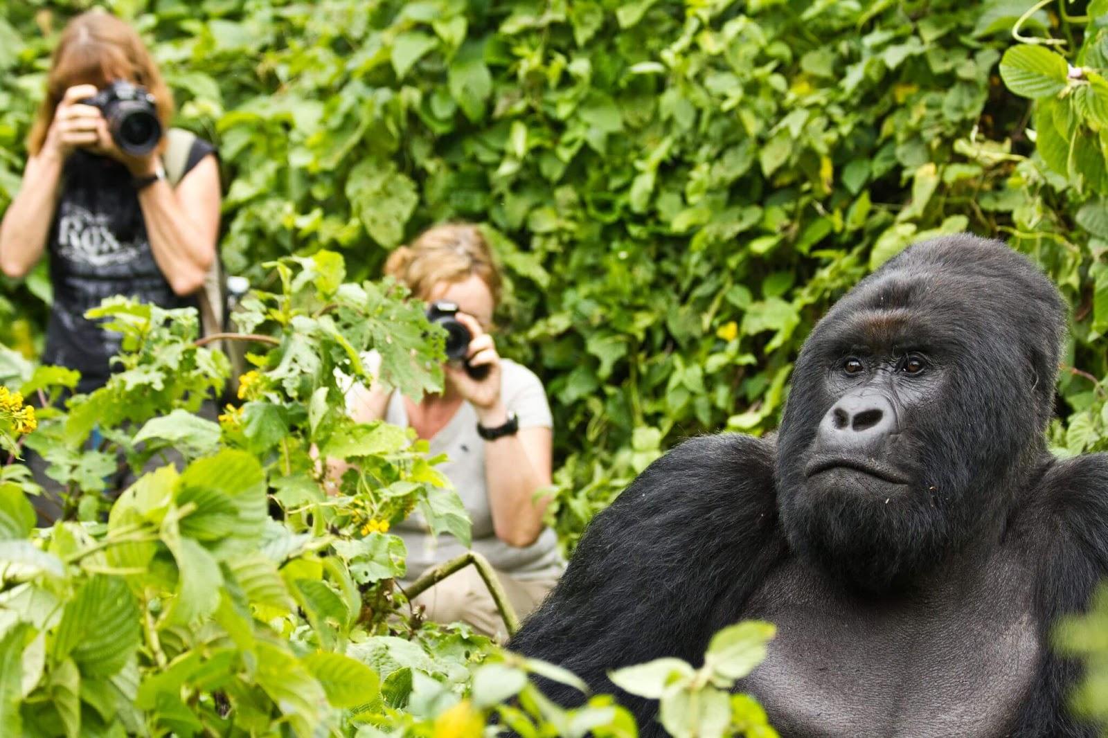 africa tour operators in uganda