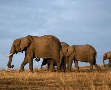 3 Days Tsavo Wildlife Safari
