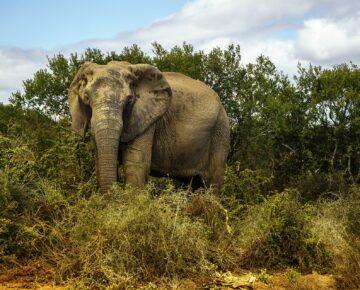 Discounted Safaris in Uganda