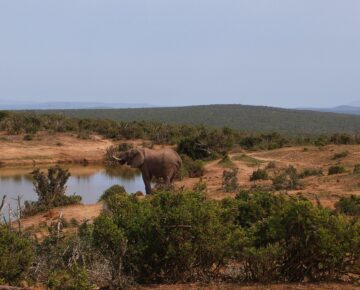Group Safaris in East Africa