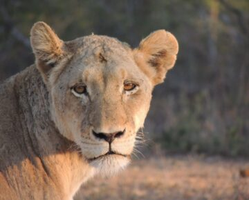Tailor-Made Safaris in Uganda