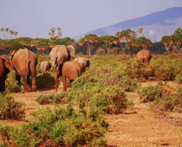 15 Days Lifetime Holiday in Uganda