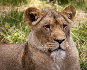 18 Days Best of Uganda Primates & Wildlife Safari
