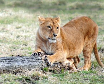 21 Days Grand Uganda Safari Adventure