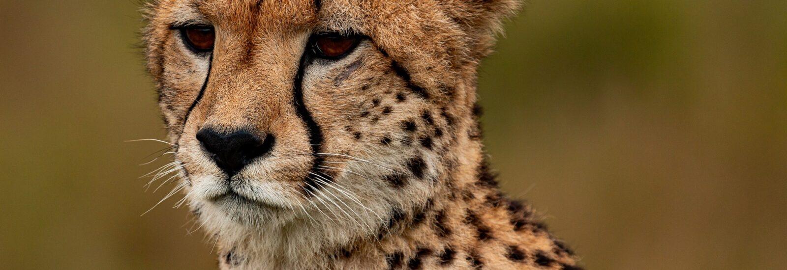 8 Days Classic Safari in Uganda