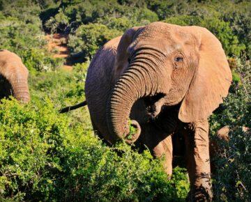 9 Days Remarkable Adventure in Uganda