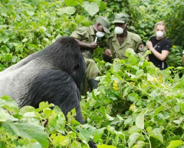 When to Visit DR Congo